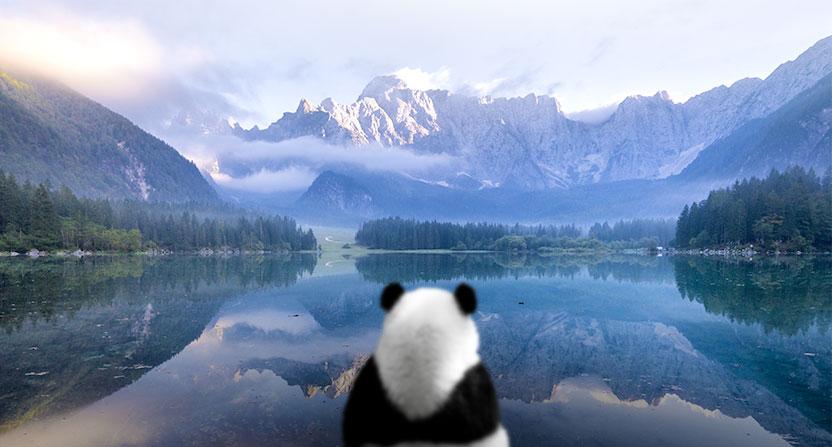 Pour réussir votre arrêt, restez aussi zen que le Panda A&L