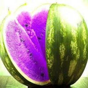 melon violette