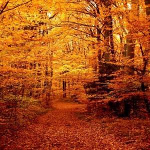 Autumn KENTUCKY